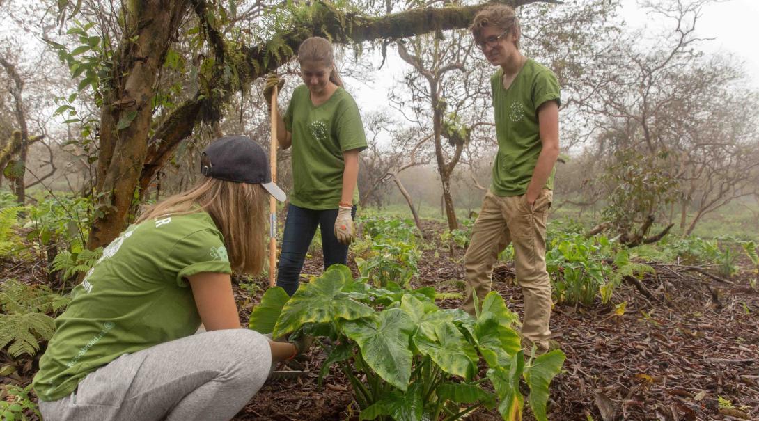 Voluntarios retirando plantas invasoras en su voluntariado ambiental en Galápagos.
